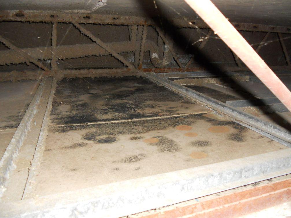 Florida Mold Remediation